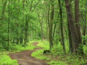 Copaci in padure